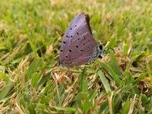 在草的蝴蝶 免版税库存照片