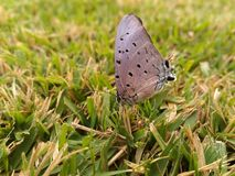 在草的蝴蝶 库存照片
