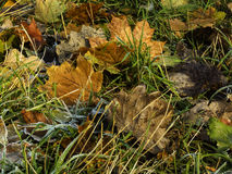 在草的Abscissed叶子 库存照片