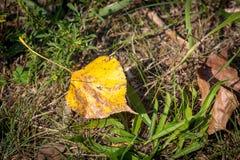 在草的Autum叶子 免版税图库摄影