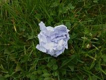 在草纸球的垃圾 免版税库存照片