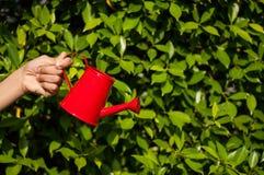 在草背景的红色喷壶 库存图片