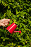 在草背景的红色喷壶 免版税库存照片