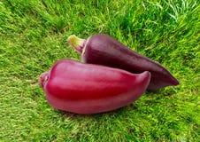在草背景的红色辣椒粉胡椒 图库摄影