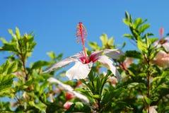 在草背景的美丽的花 希腊 免版税库存图片