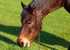 在草背景的马在乌克兰村庄 免版税库存图片