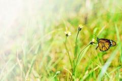 在草花的蝴蝶有软的梦想的背景 免版税库存图片