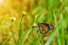 在草花的蝴蝶 免版税库存图片