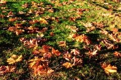 在草草坪的下落的叶子在公园 库存照片