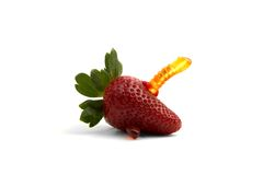 在草莓的果冻蠕虫 库存图片