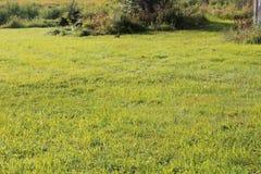 在草边缘的一个绿色领域的小棕色小兔 库存照片