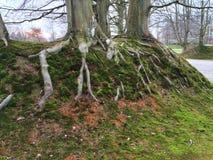 在草边缘的树根 库存图片