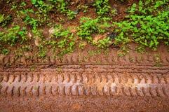 在草途中的泥泞的轮胎跟踪 免版税库存图片