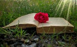 在草,一朵玫瑰的一本旧书作为书的标志 免版税库存图片