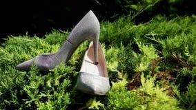 在草,妇女` s的高跟鞋穿上鞋子介绍,妇女` s鞋子 股票录像