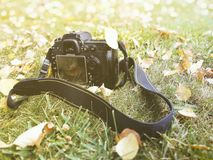 在草,秋天,黄色叶子的一台照相机, 库存图片