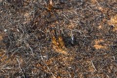 在草以后被烧了 免版税库存图片