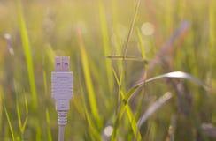 在草-绿色技术的白色USB缆绳 库存照片