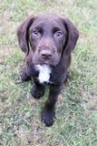 在草画象的后面逗人喜爱的小狗 免版税图库摄影