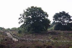 在荒地的小径在Havelte,荷兰附近 库存图片