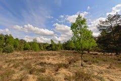 在荒地的新鲜的春天树环境美化与干草,卡尔姆特豪特,富兰德,比利时 免版税库存照片