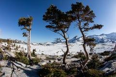在荒芜原野,加利福尼亚山的树  库存图片