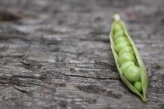 在荚的豌豆 免版税图库摄影