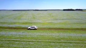 在荞麦领域之间的空中白色汽车驱动 股票录像
