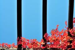 在荫径的红色秋天常春藤 免版税图库摄影