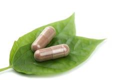 在药片规定的绿色叶子宏指令 免版税图库摄影