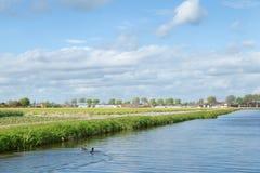 在荷兰乡下附近运河的开花的花田  Hous 免版税图库摄影