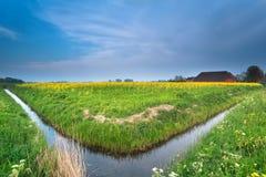 在荷兰农田的河和油菜籽花 库存照片