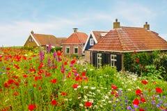 在荷兰房子前面的开花的野花 免版税库存照片