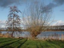 在荷兰湖边缘的树 免版税库存图片