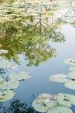 在荷花池浇灌反射在一个晴天 图库摄影