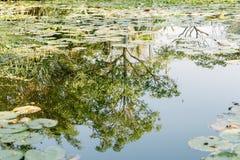 在荷花池浇灌反射在一个晴天 免版税库存照片