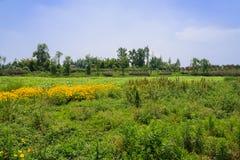 在荷花池的开花的海滨在晴朗的树木繁茂的村庄前 库存图片