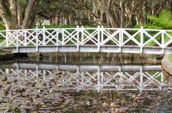 在荷花池的白色走道桥梁有它的在水的阴影的在与森林的特写镜头背景的在悉尼 图库摄影