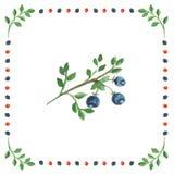 在莓果构筑的白色背景的野草莓莓果 库存图片