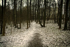 在莫斯科公园 免版税库存照片