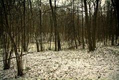 在莫斯科公园 免版税库存图片