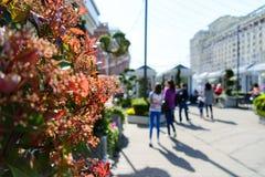 在莫斯科街道上的花在一个晴天 免版税图库摄影