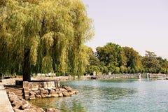 在莱芒湖堤防的柳树在Ouchy村庄洛桑 库存照片
