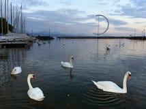 在莱芒湖的堤防在有天鹅和游艇的洛桑在ev 免版税图库摄影
