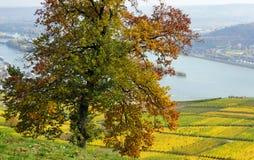 在莱茵河的秋天 库存照片