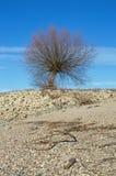 在莱茵河莱茵的岸的树 免版税库存图片