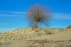 在莱茵河莱茵的岸的树 库存照片