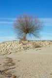 在莱茵河莱茵的岸的树 免版税库存照片