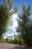 在莱茵河附近的晴天 库存图片