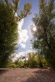 在莱茵河附近的晴天 免版税图库摄影